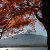 Shot from Lake Kawaguchi where rows of maple trees bring in hoards of tourists in November.