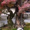 tanuki date near nanzenji