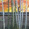 Garden near Arashiyama