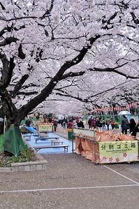 Ueno Park in spring. Tokyo