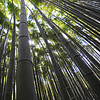 The rich greens of the bamboo forest near Arashiyama.