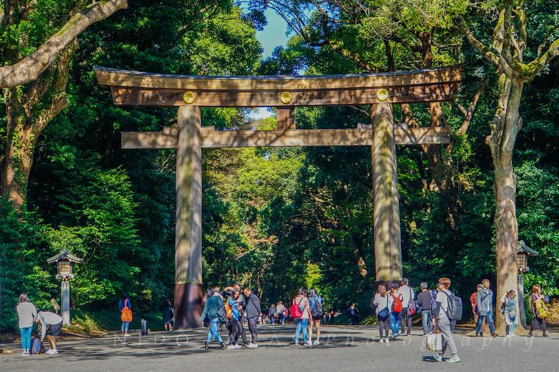 Meiji Shrine Torii - Tokyo