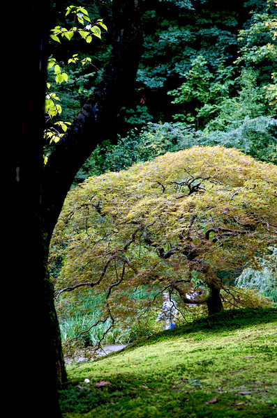 Japanese Gardens 26