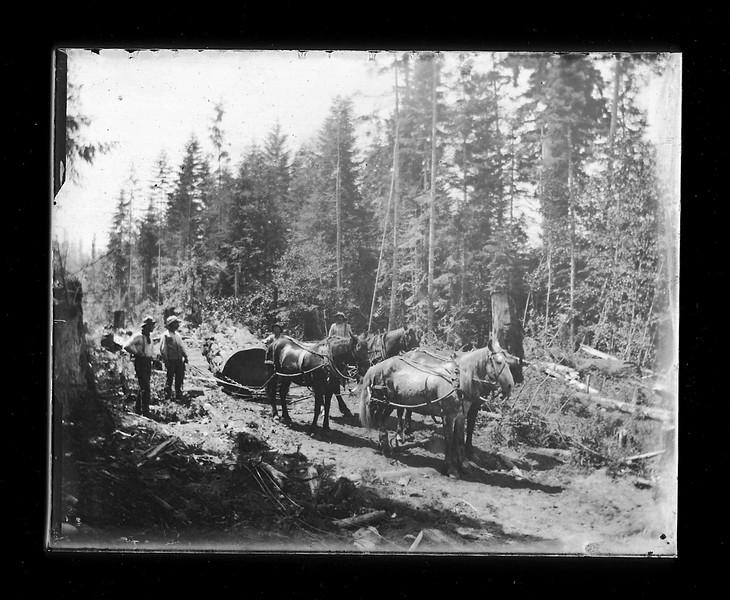 LoggingWHorseTeam copy