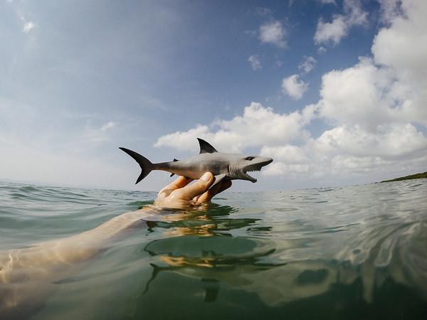 Tiburon in Mexico