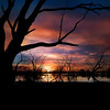 Campbell Swamp, Lake Wyangan, NSW