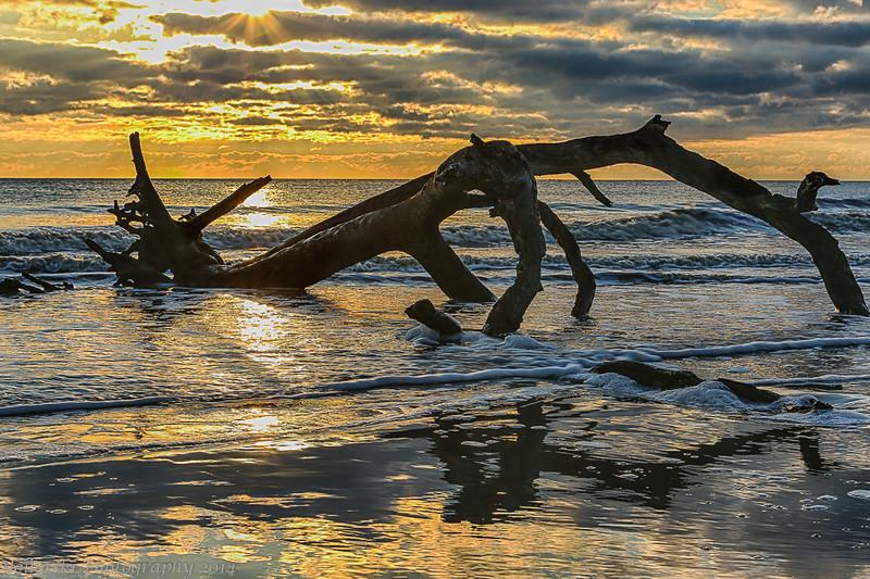 Root Beach