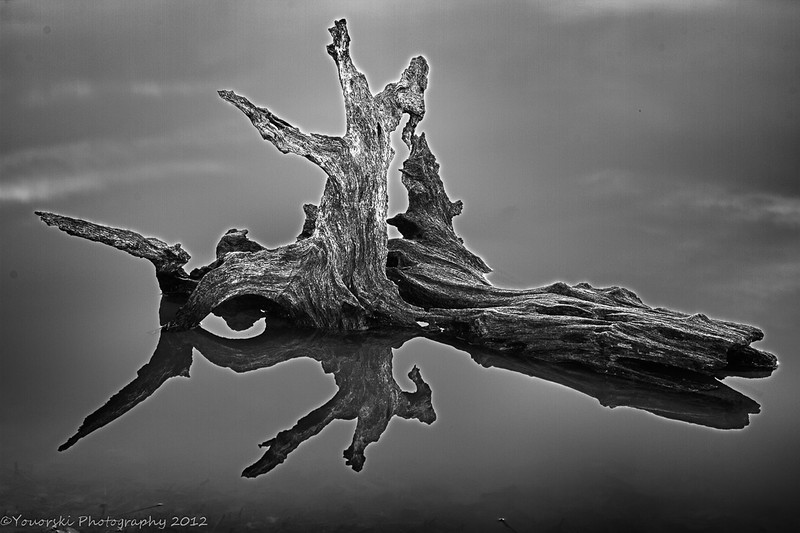 This is a stump in the pond at Morgan Dairy but I thought it would look better in this gallery. Just after I shot this one a beaver swam up onto the bottom of the log to look at me. Startled both of us. I don't have the beaver but I do have the totally blurred photos:-)Feb. 2012
