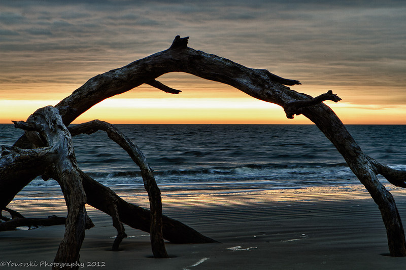 Driftwood Beach, Jekyll Is GA<br /> This photo was given the award of Mark of Excellence on I SHOT IT. Cool