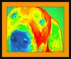 Jill Duncan_dog in orange