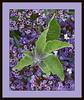 Jill Duncan_Purple Spring