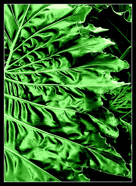 Jill Duncan-Big Green Leaf border