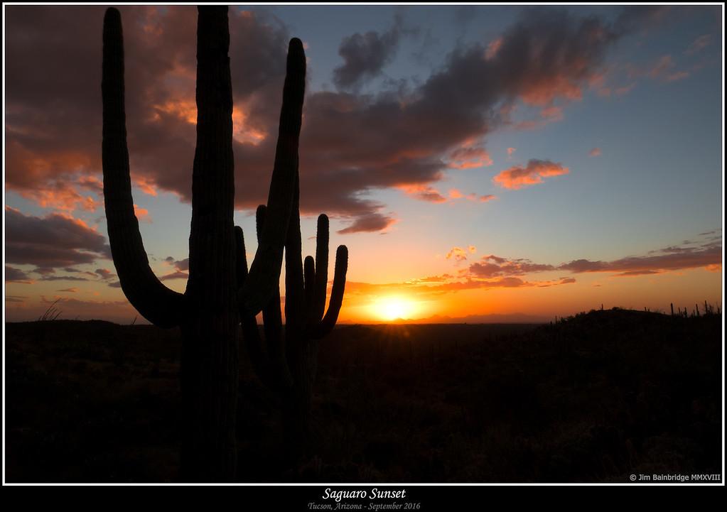 IMG_0239-Saguaro Sunset