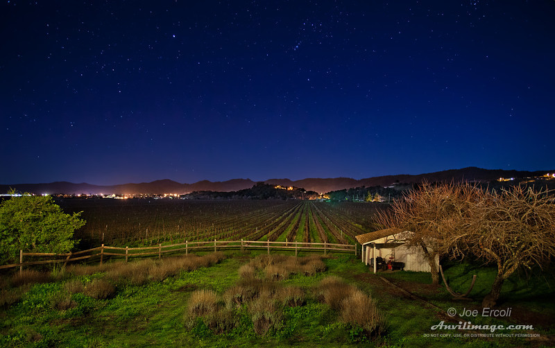 Starry Night in the Vineyard