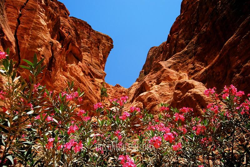 flowers in Petra
