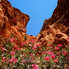 flowers in Petra