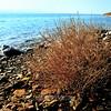 the Dead Sea 2