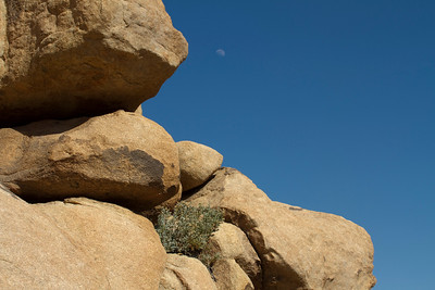 Joshua Tree NP and moon 3-2-2012