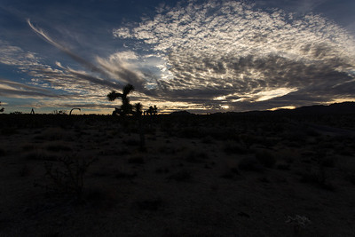Morning Clouds at Joshua Tree