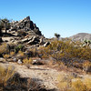 Joshua Tree National Park 11