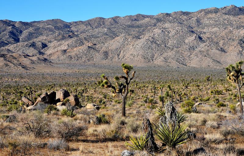 Joshua Tree National Park in California 101