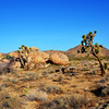 Joshua Tree National Park in California 100