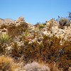 Joshua Tree National Park 12