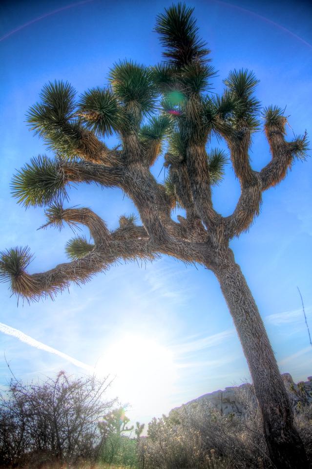 Joshua Tree 47