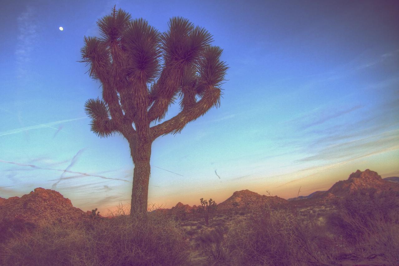 Joshua Tree 61