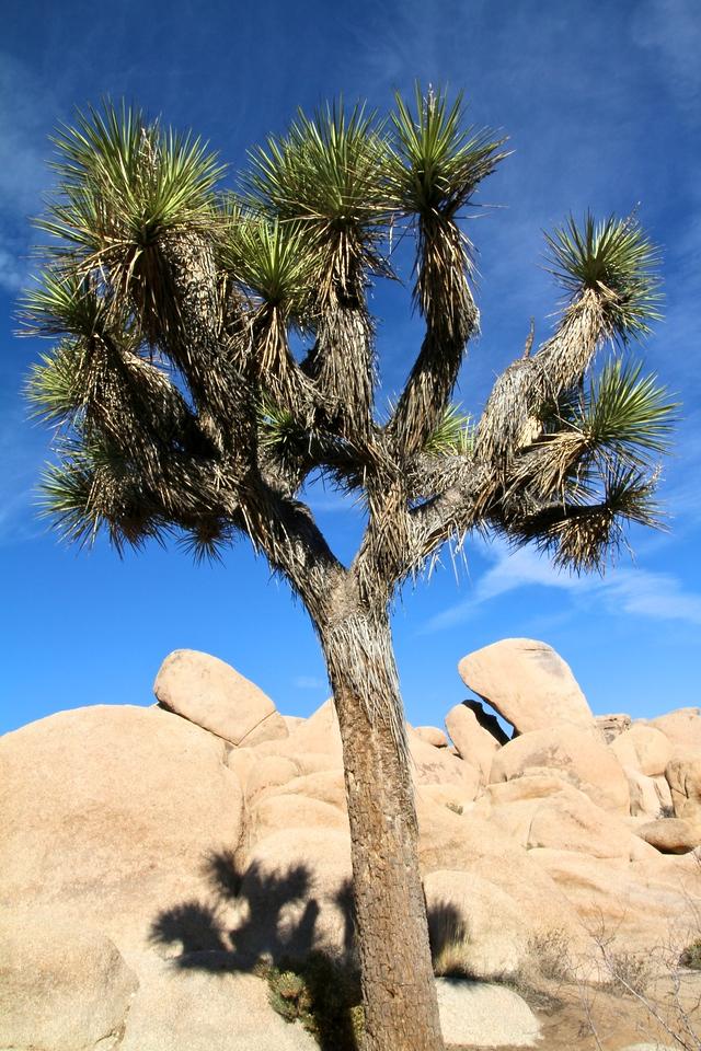 Joshua Tree 31