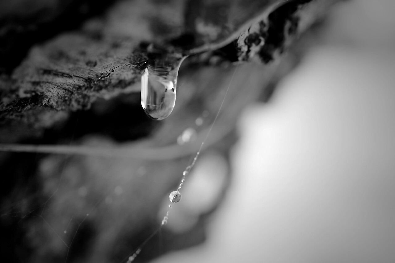 Dripping pine sap done in monochrome.