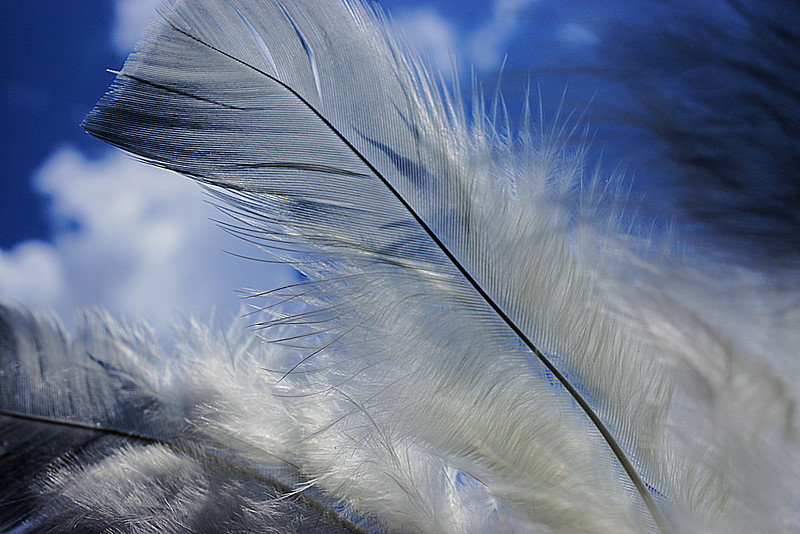 Macro photo of white feathers against a blue sky with fluffy clouds.