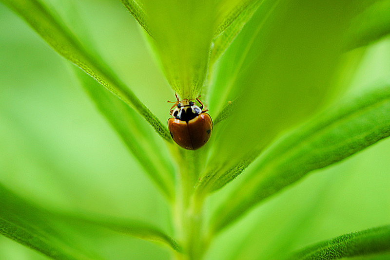 Macro ladybug on a green plant.