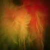 Macro photo of feathers