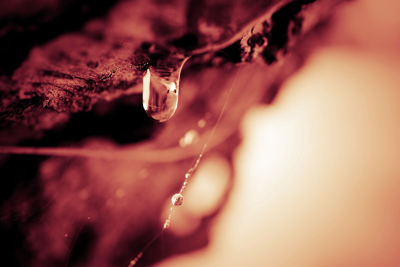 Dripping pine sap done in a reddish filter