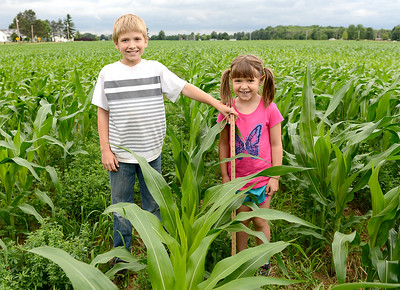 Trenton Horner, 10, and his sister Addison, 7, of Tiffin, stand in the cornfield with a yard stick measuring the corn's height at their grandfather's, Ron Pickworth, farm.  KRISTIN BAUER | CHRONICLE