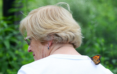 Patsy Nash, of Avon, patiently waits as a monarch butterfly flies off her back at the Miller Nature Preserve butterfly house on July 9. KRISTIN BAUER | CHRONICLE
