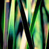 Through the cattail frond maze in color and a bit abstract.