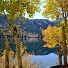Fall Colors Near Silver Lake Near June Lake California