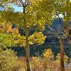 Fall Colors Near Silver Lake Near June Lake California 2