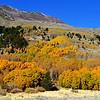 Fall Colors near June Lake near Mammoth Lakes California