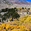Fall Colors near June Lake near Mammoth Lakes California 3