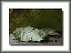 Boulder resting in Cave Hocking Hills