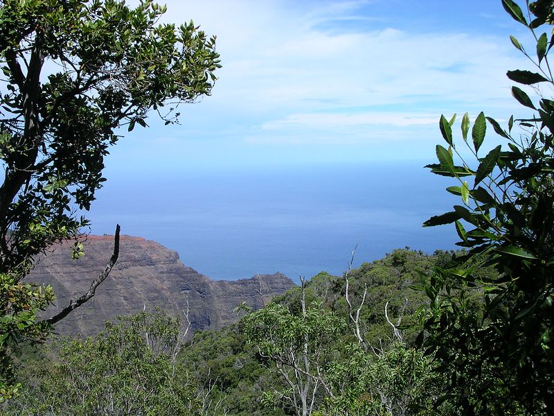 Glimpse of the ocean from trail