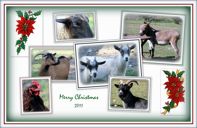 2011 Christmas - Christmas Card for Joanne and John using their farm animals