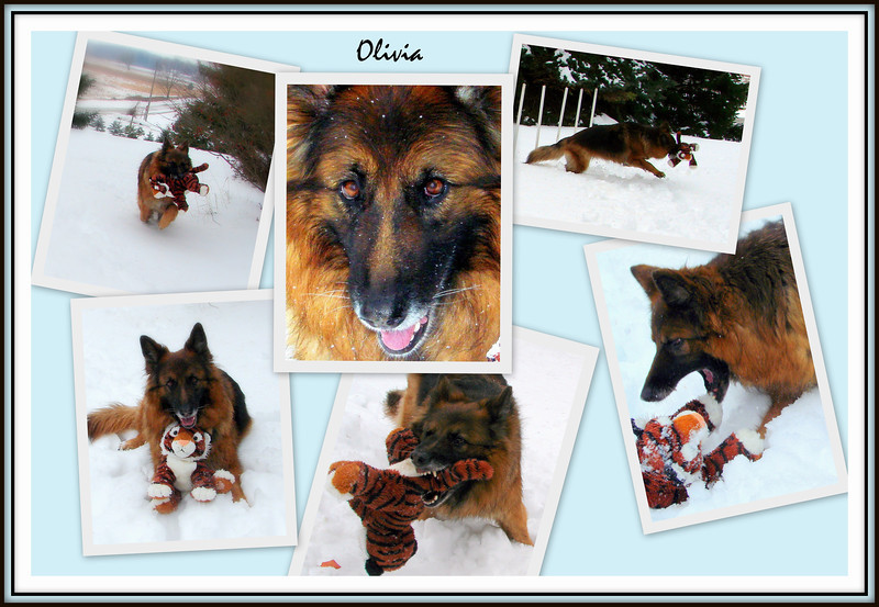 2006 - Olivia playing with her favorite stuffie in the snow.  She's 6 years old in these pictures.