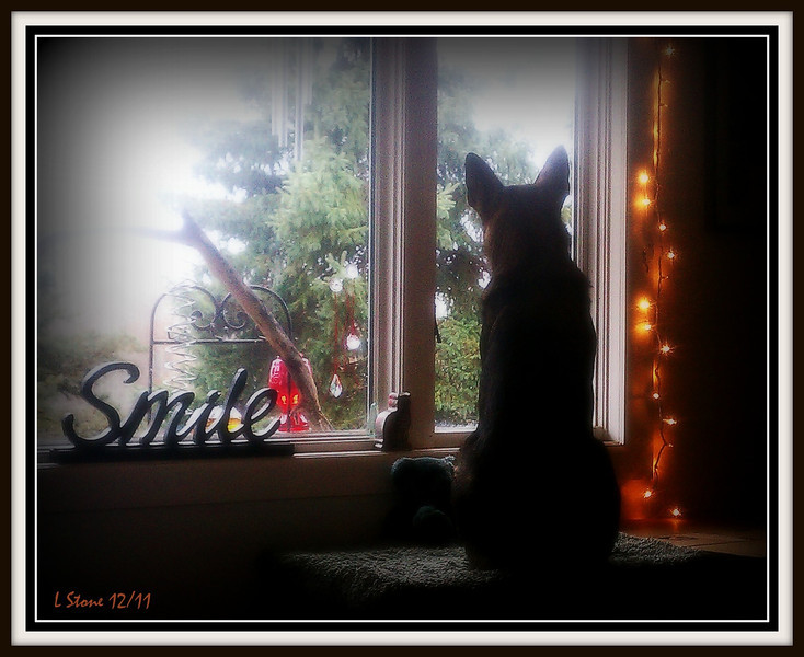 2011 - Jake watching the birds at the feeders and sometimes surprising them!!