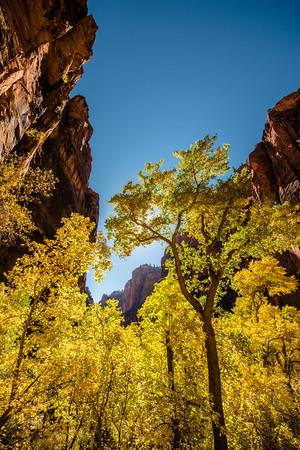 Autumn Hike_Zion National Park_Utah_photo by Gabe DeWitt_October 31, 2013-12