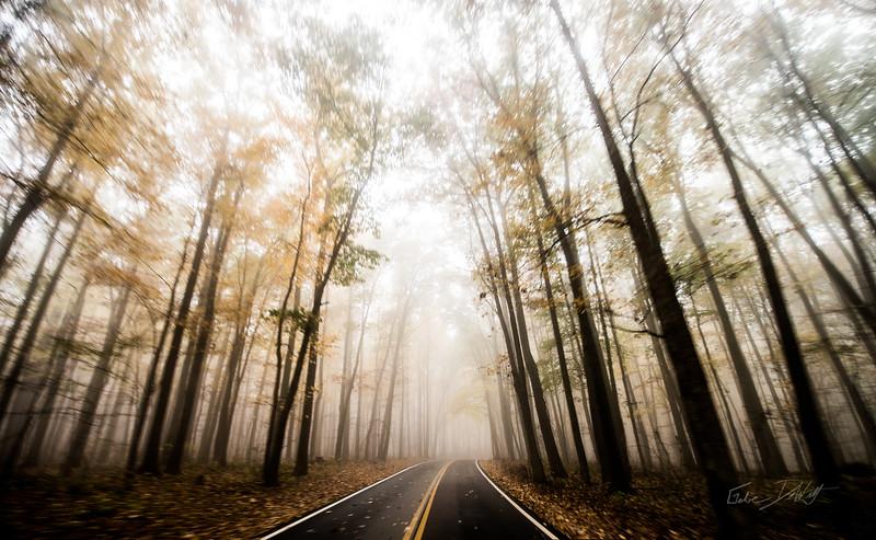 Autumn_Coopers Rocks_West Virginia_photo by Gabe DeWitt_October 18, 2014-146
