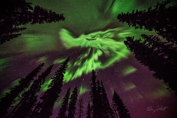 Faces of the Aurora